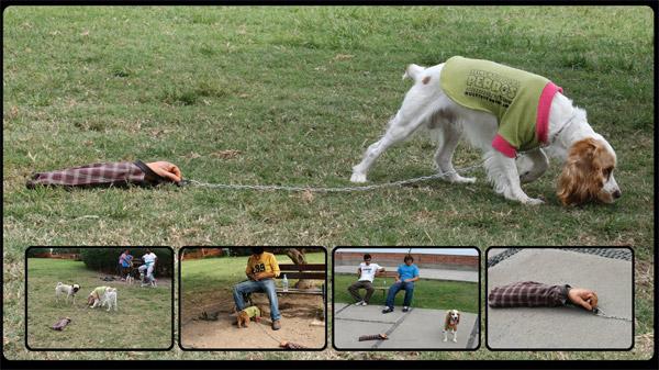 Реклама собачьего корма